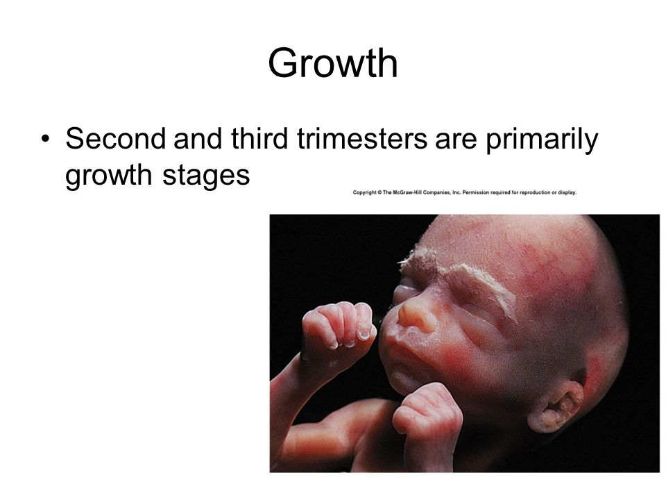 Growth Second and third trimesters are primarily growth stages