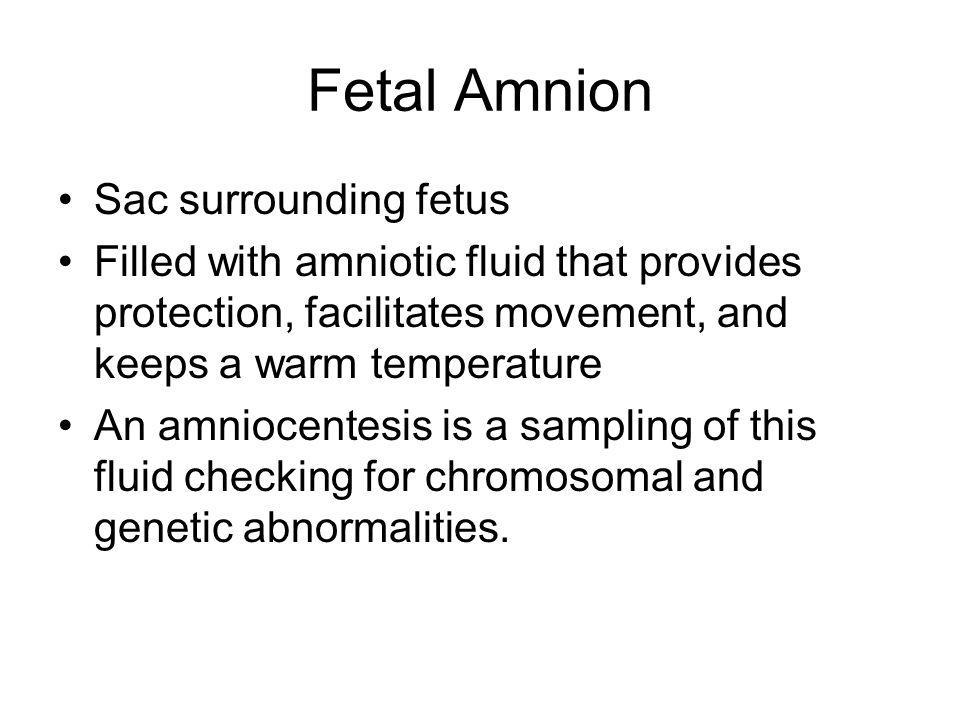Fetal Amnion Sac surrounding fetus