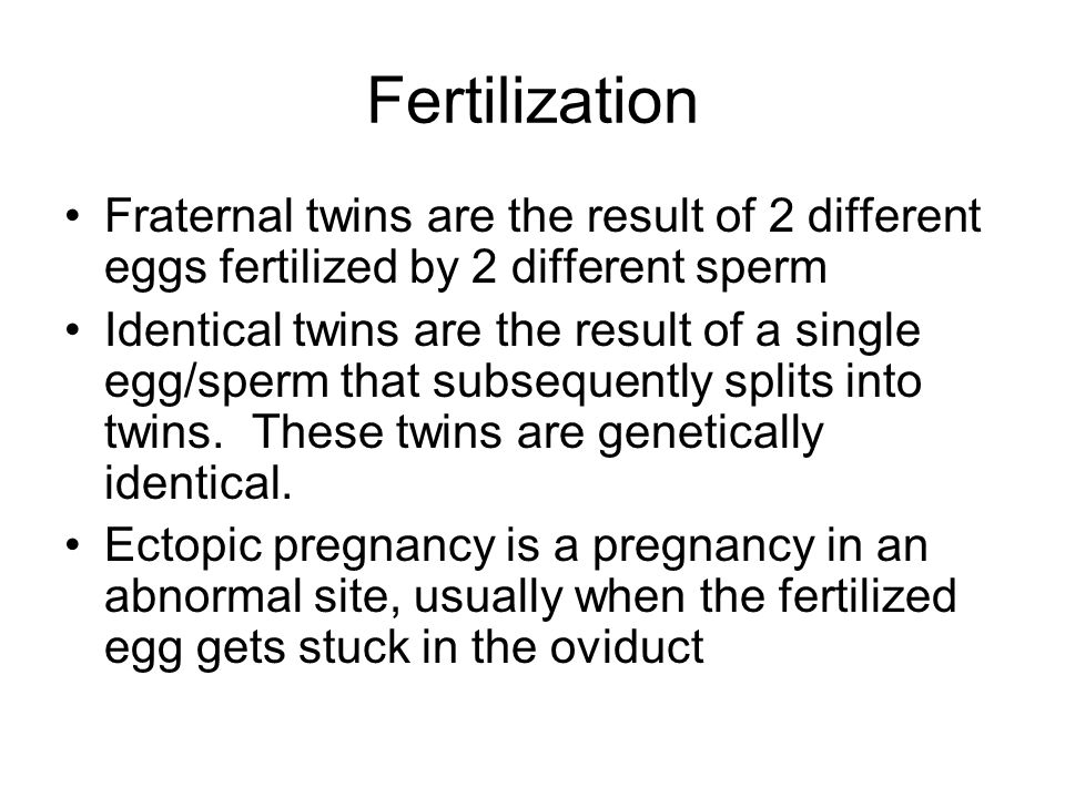 Fertilization Fraternal twins are the result of 2 different eggs fertilized by 2 different sperm.