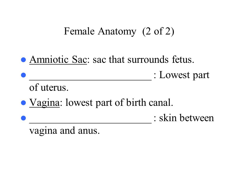 Female Anatomy (2 of 2) Amniotic Sac: sac that surrounds fetus. _______________________ : Lowest part of uterus.