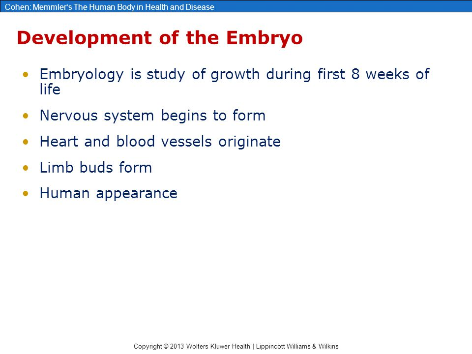 Development of the Embryo