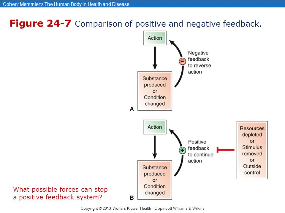 Figure 24-7 Comparison of positive and negative feedback.