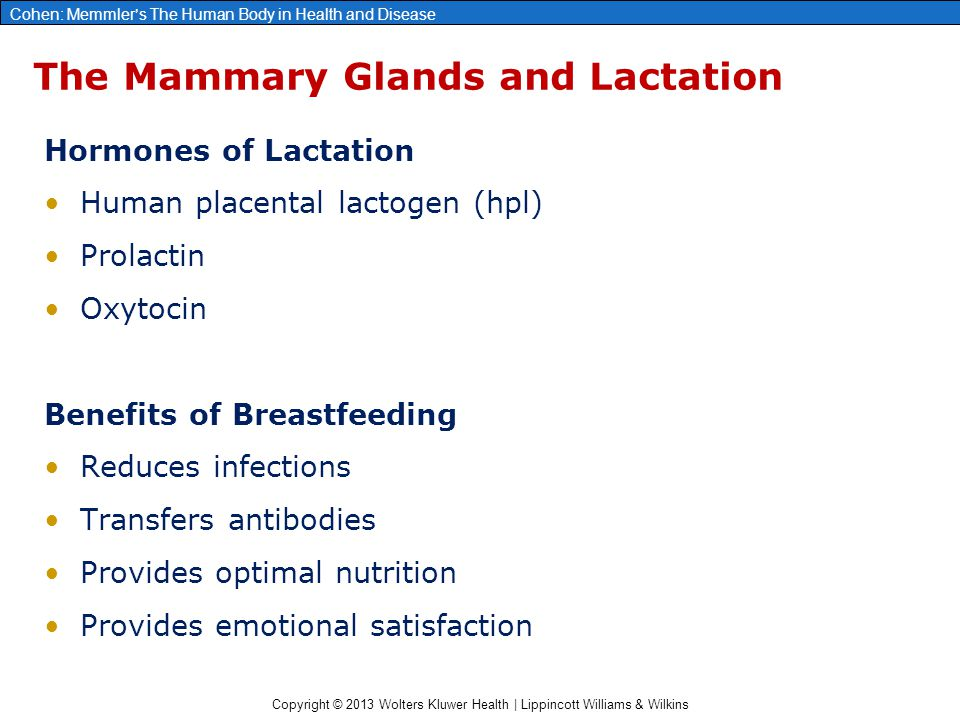 The Mammary Glands and Lactation
