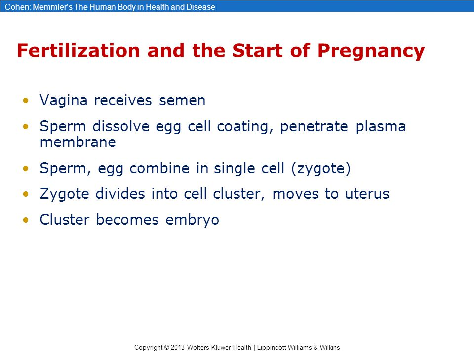 Fertilization and the Start of Pregnancy