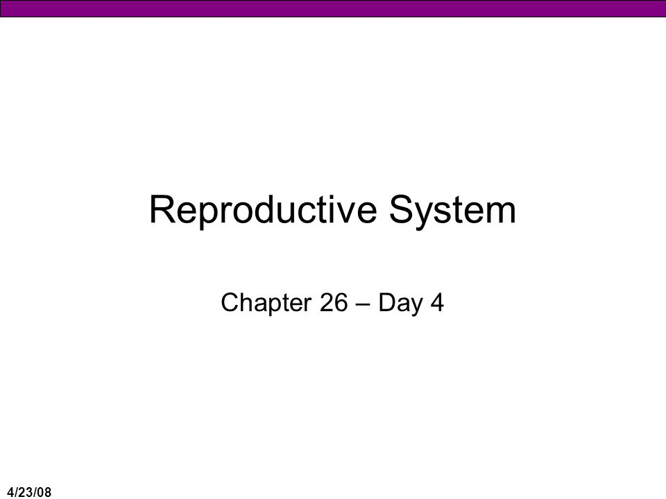 Reproductive System Chapter 26 – Day 4 4/23/08