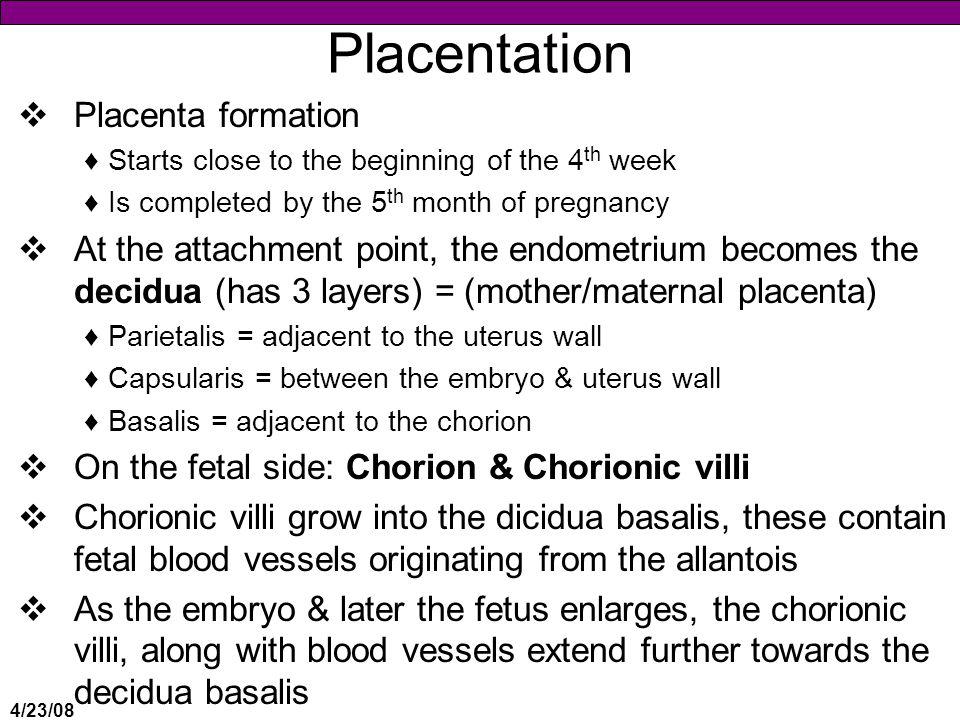 Placentation Placenta formation