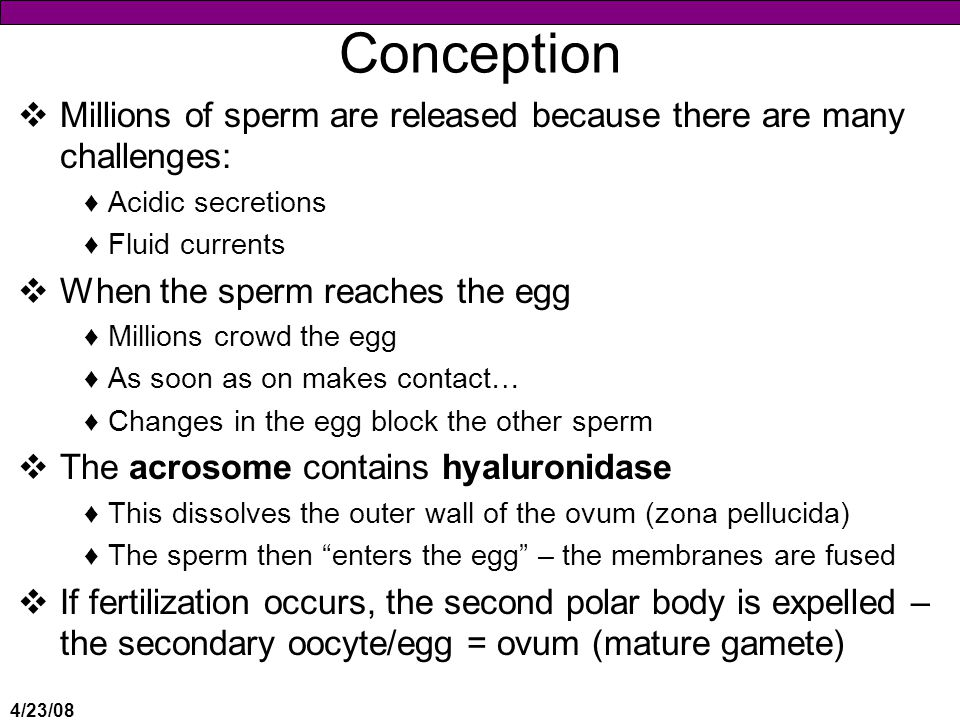 Conception Millions of sperm are released because there are many challenges: Acidic secretions. Fluid currents.