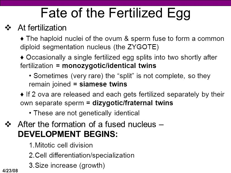 Fate of the Fertilized Egg