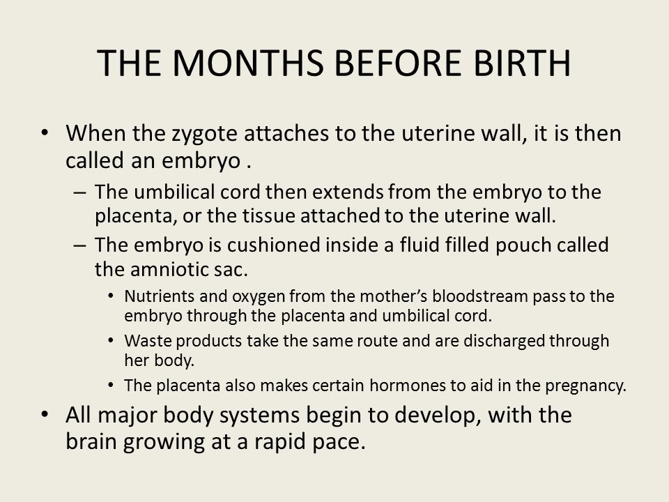 THE MONTHS BEFORE BIRTH