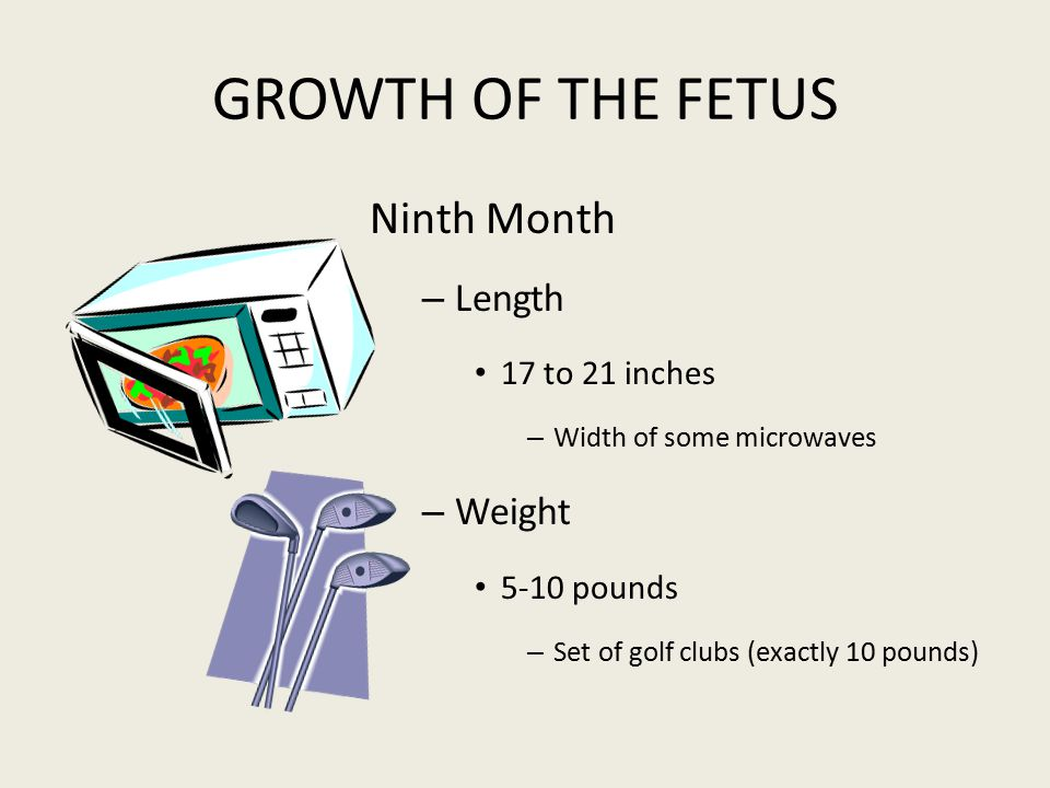 GROWTH OF THE FETUS Ninth Month Length Weight 17 to 21 inches