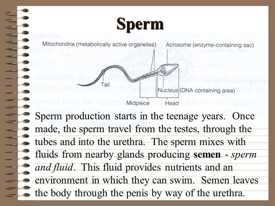 Sperm travel in male attractively, sexy women