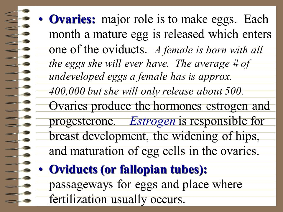 Ovaries: major role is to make eggs