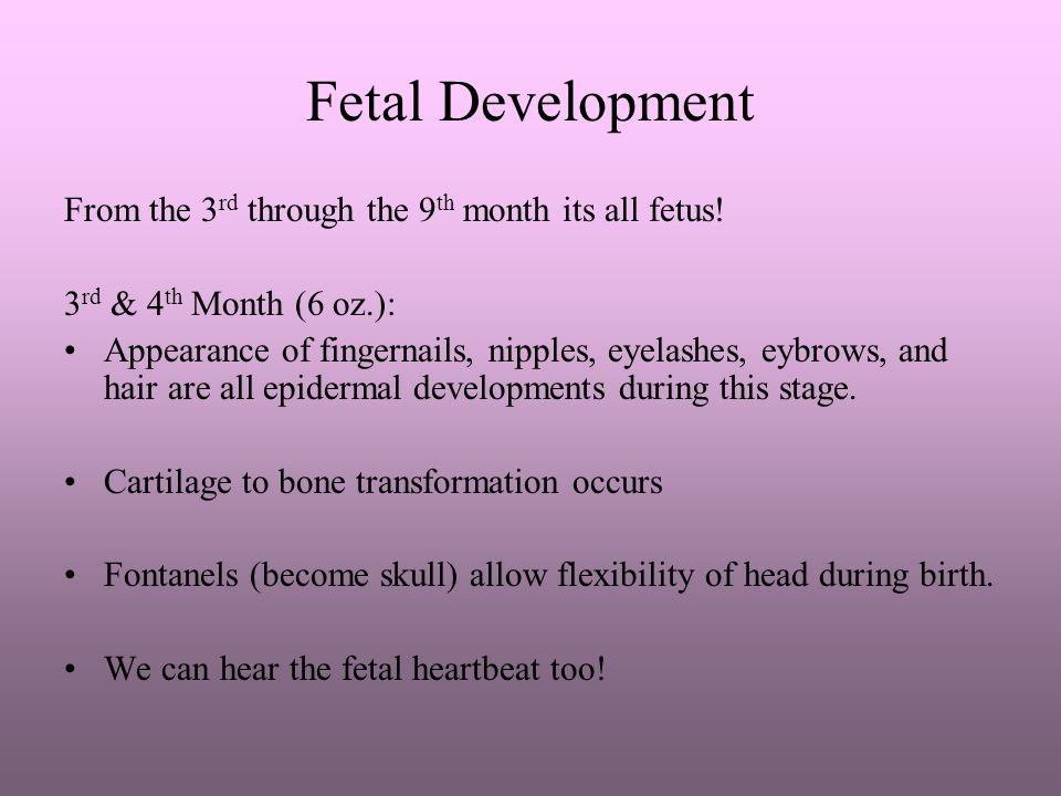 Fetal Development From the 3rd through the 9th month its all fetus!
