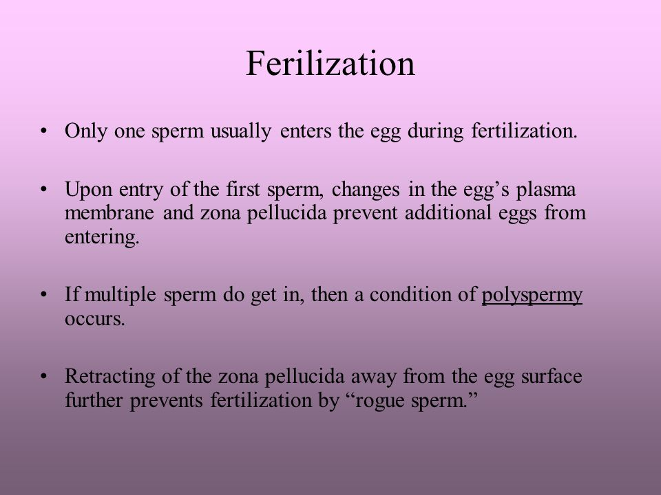 Ferilization Only one sperm usually enters the egg during fertilization.