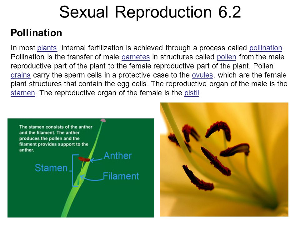 Sexual Reproduction 6.2 Pollination