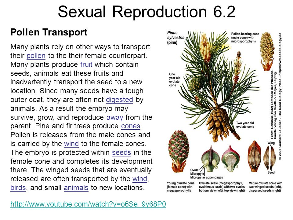 Sexual Reproduction 6.2 Pollen Transport