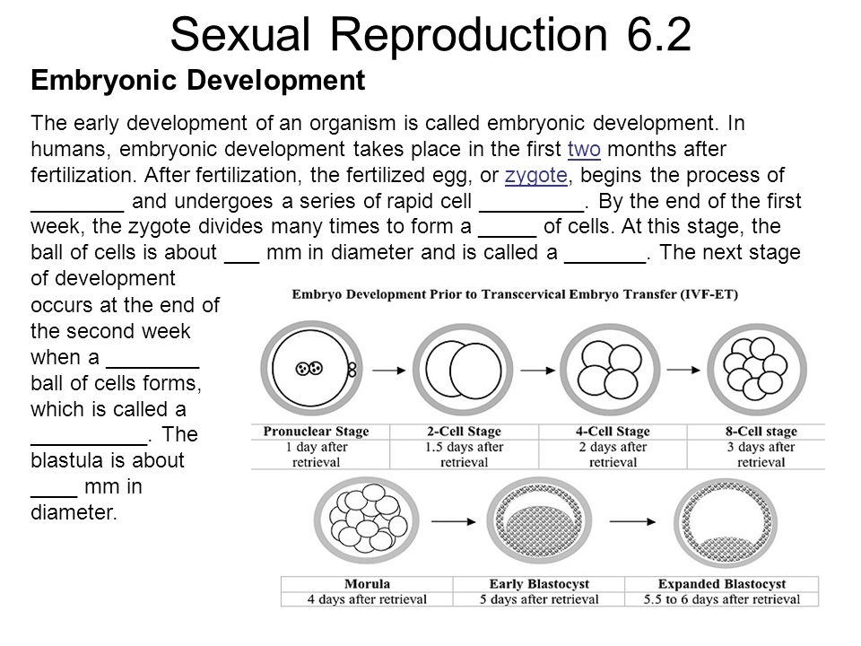 Sexual Reproduction 6.2 Embryonic Development