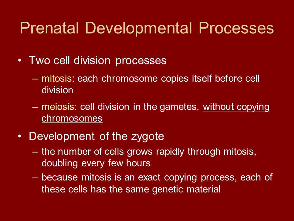 Prenatal Developmental Processes