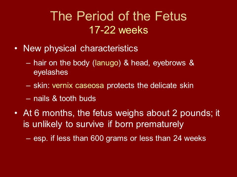 The Period of the Fetus 17-22 weeks