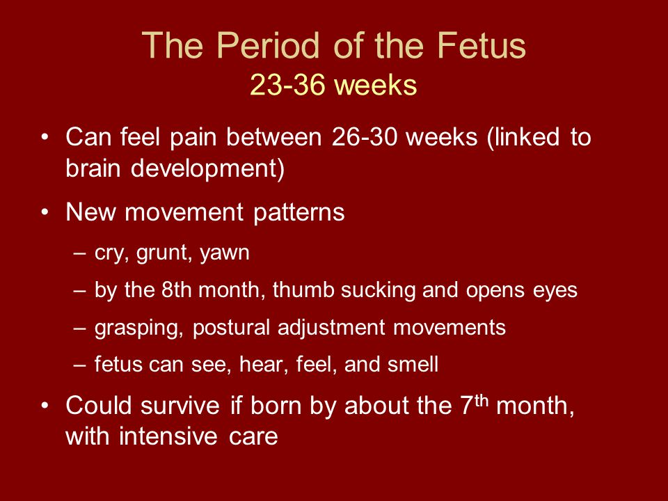 The Period of the Fetus 23-36 weeks