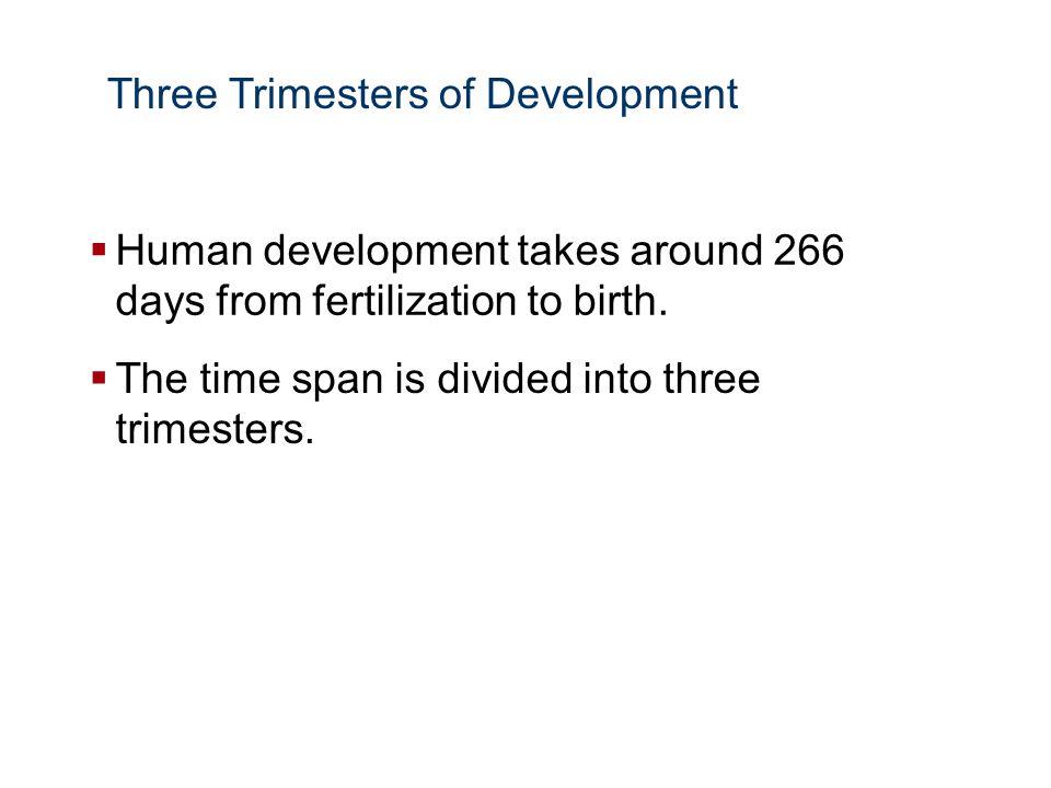 Three Trimesters of Development