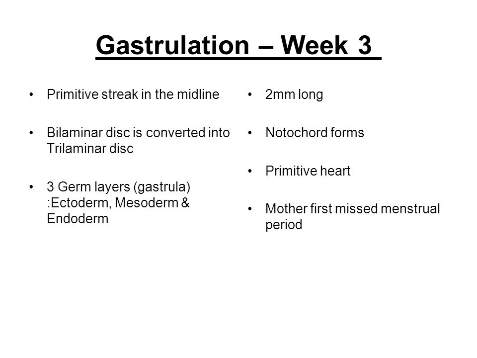Gastrulation – Week 3 Primitive streak in the midline