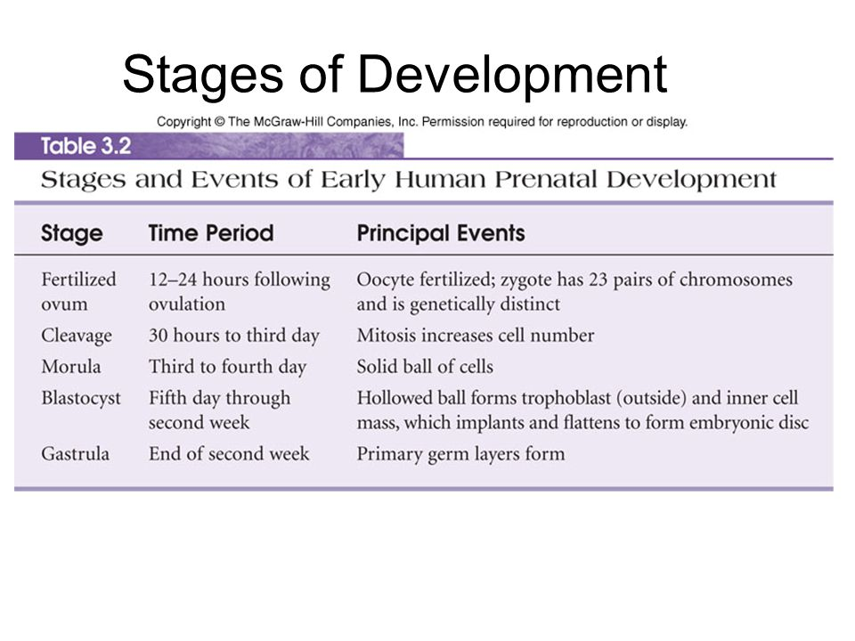 Stages of Development Table 3.2