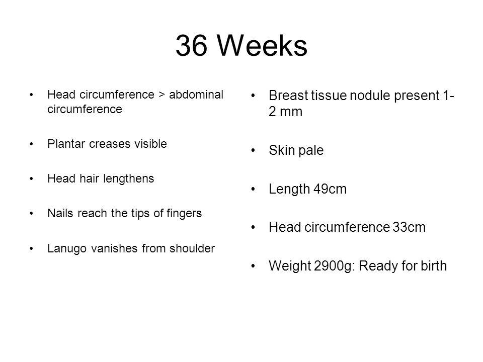36 Weeks Breast tissue nodule present 1-2 mm Skin pale Length 49cm