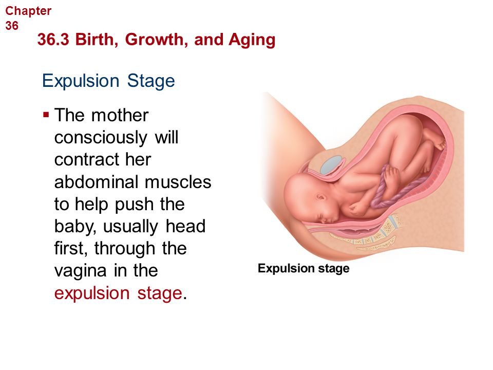 Chapter 36 Human Reproduction and Development. 36.3 Birth, Growth, and Aging. Expulsion Stage.