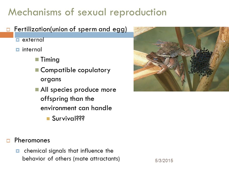 Mechanisms of sexual reproduction