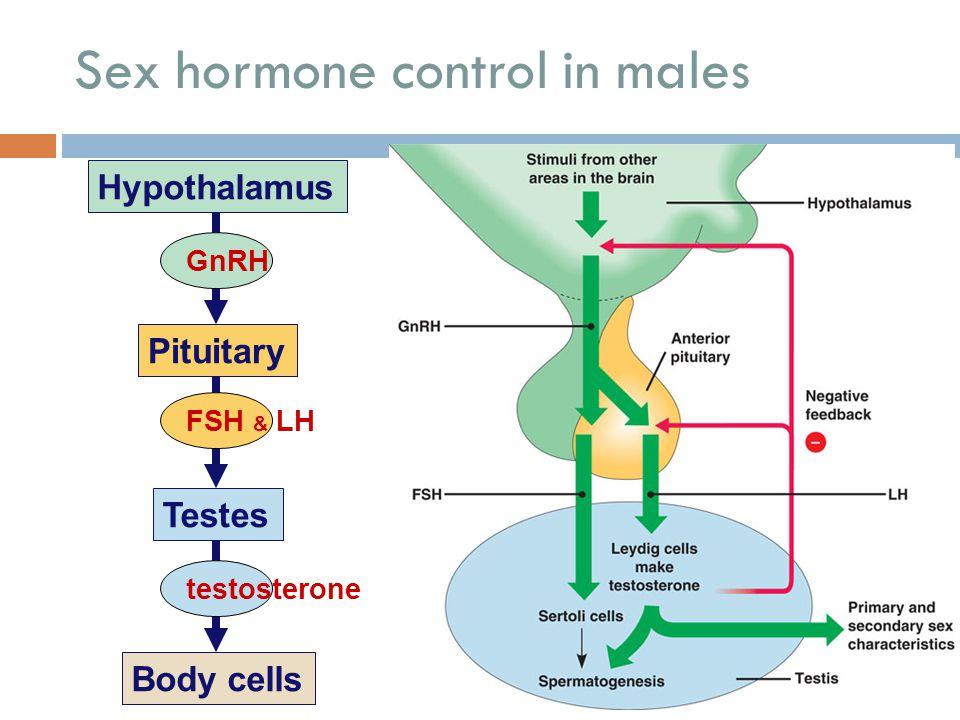 Sex hormone control in males