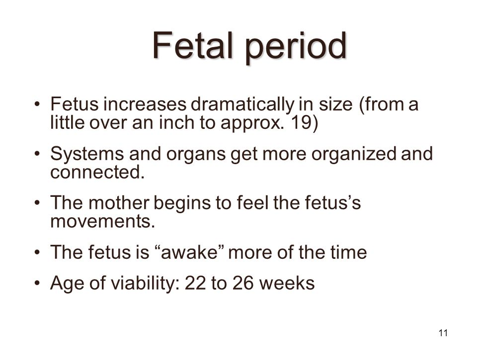 Fetal period Fetus increases dramatically in size (from a little over an inch to approx. 19)‏ Systems and organs get more organized and connected.