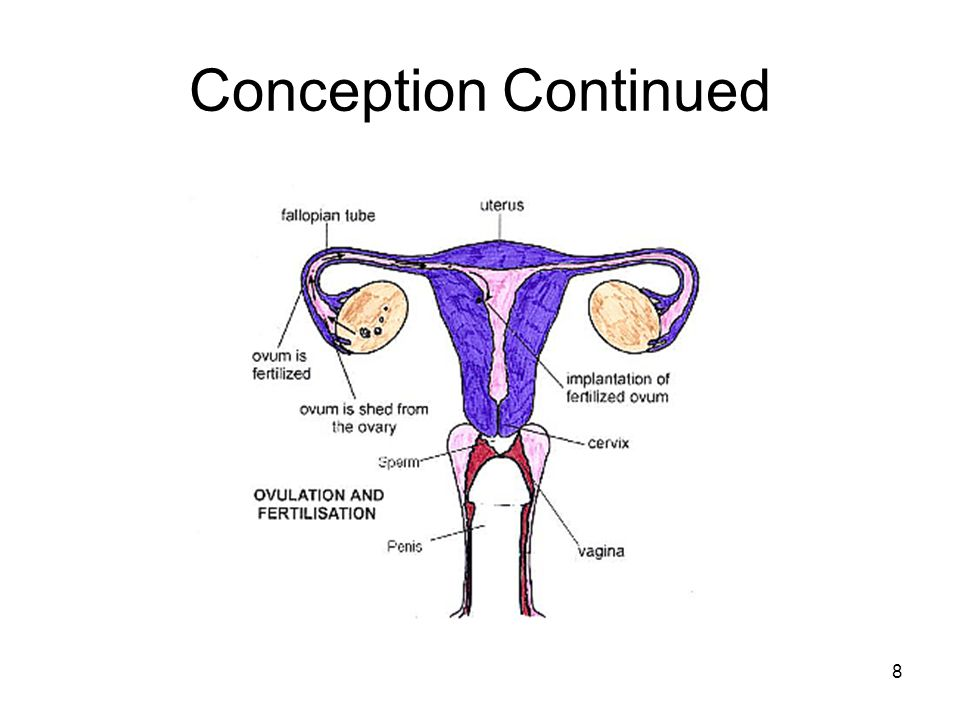 Conception Continued Psychology 7e in Modules