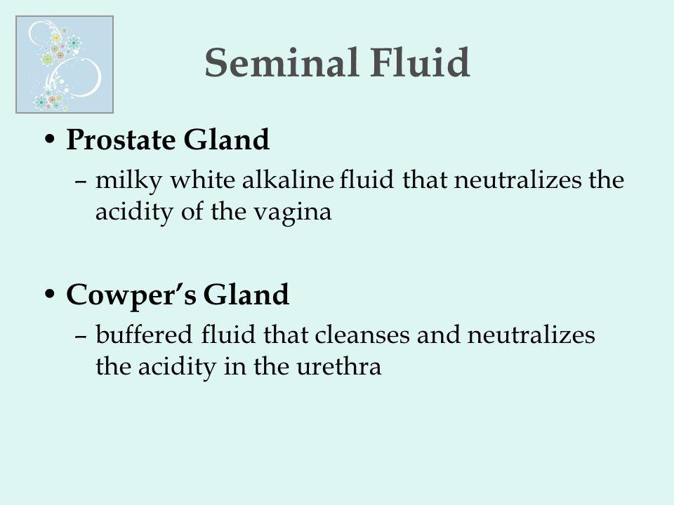 Seminal Fluid Prostate Gland Cowper's Gland
