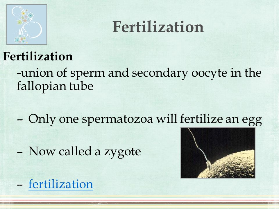 Fertilization Fertilization
