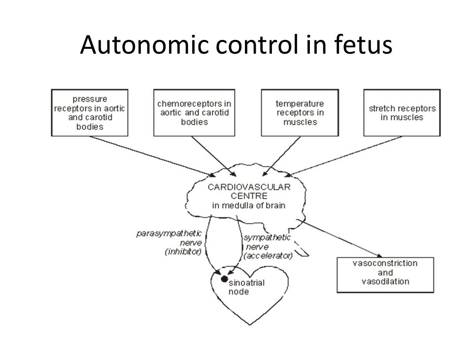 Autonomic control in fetus