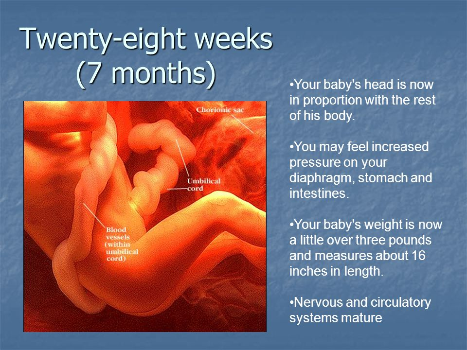 Twenty-eight weeks (7 months)