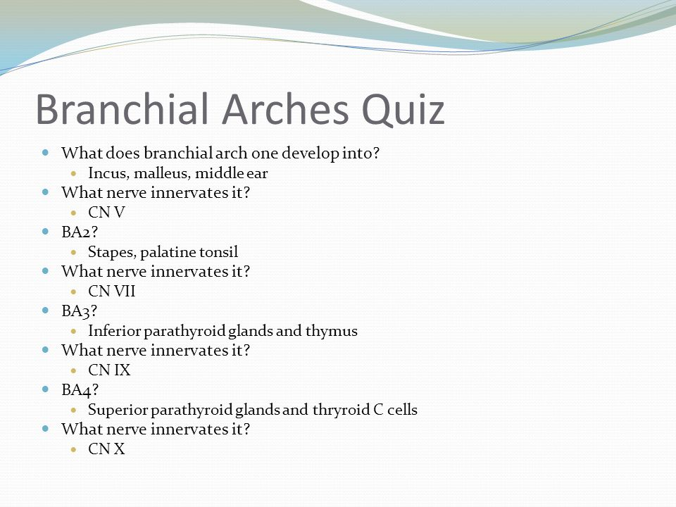 Branchial Arches Quiz What does branchial arch one develop into
