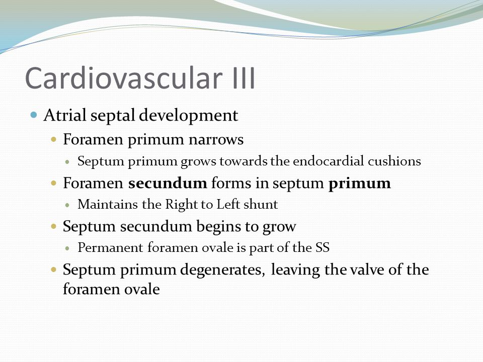 Cardiovascular III Atrial septal development Foramen primum narrows