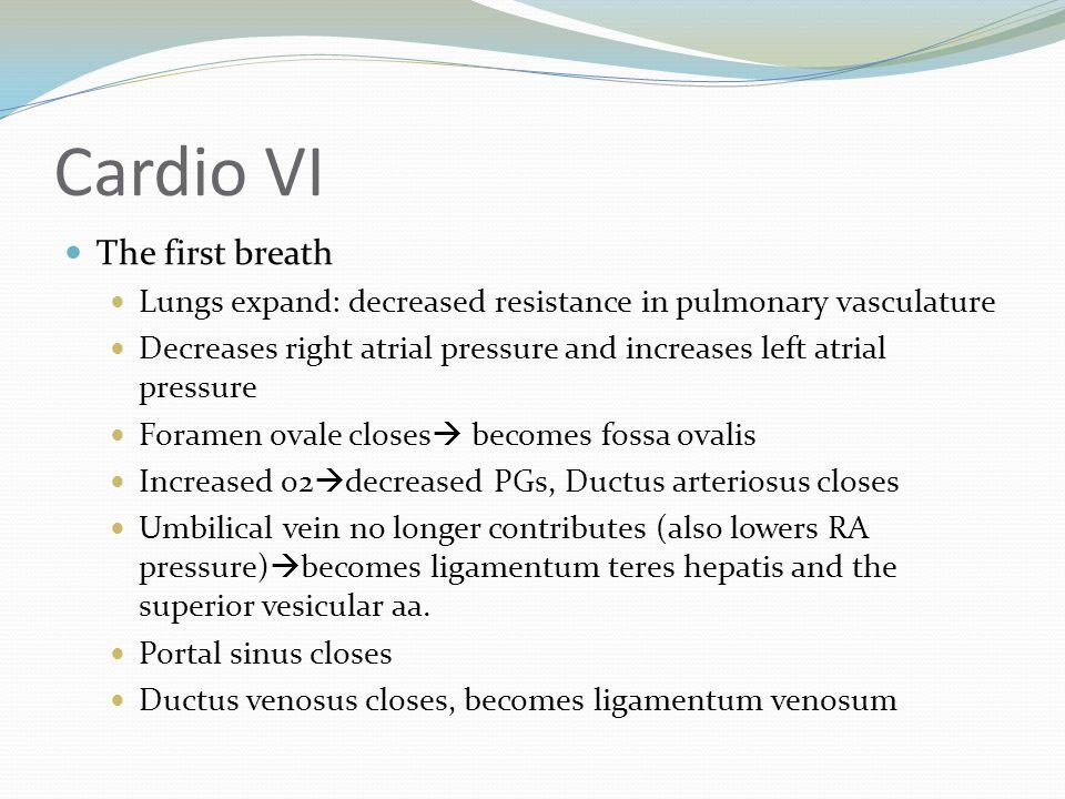 Cardio VI The first breath