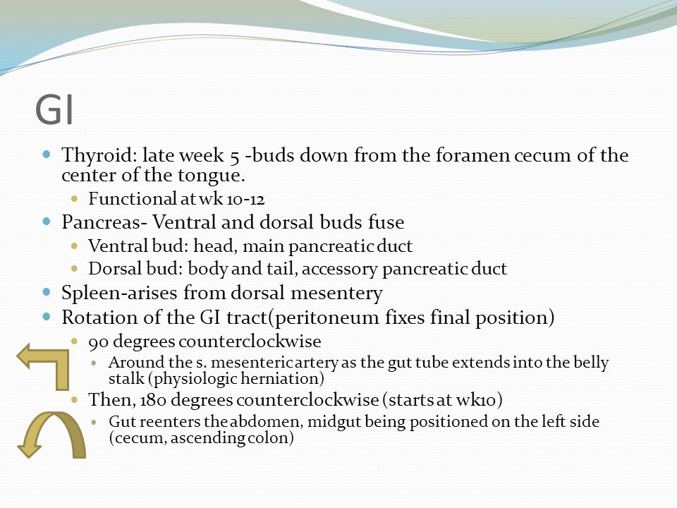 GI Thyroid: late week 5 -buds down from the foramen cecum of the center of the tongue. Functional at wk 10-12.