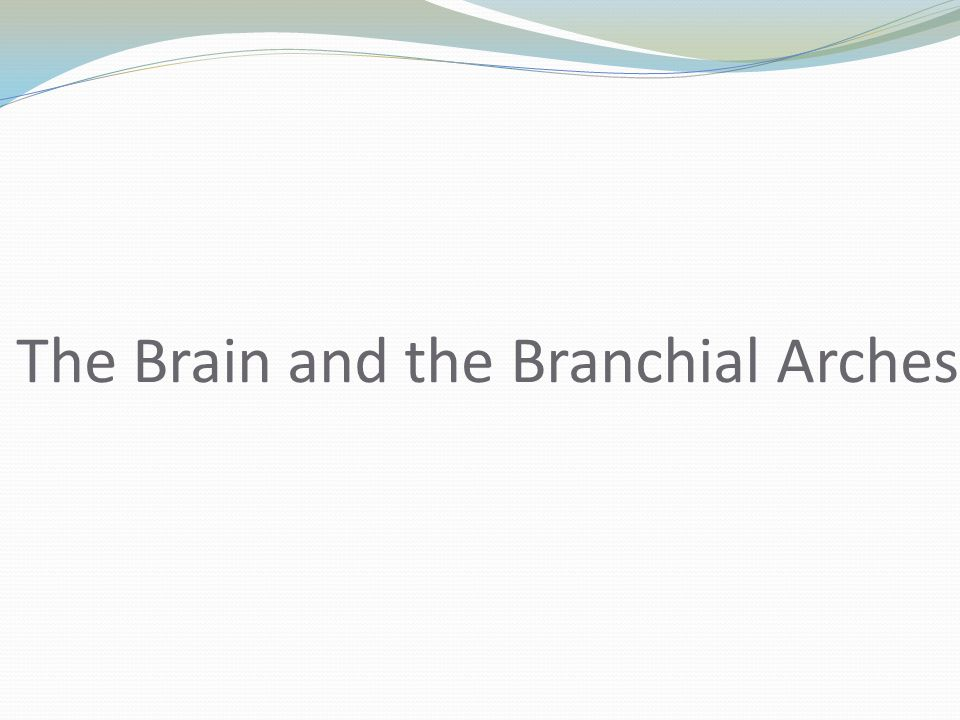 The Brain and the Branchial Arches