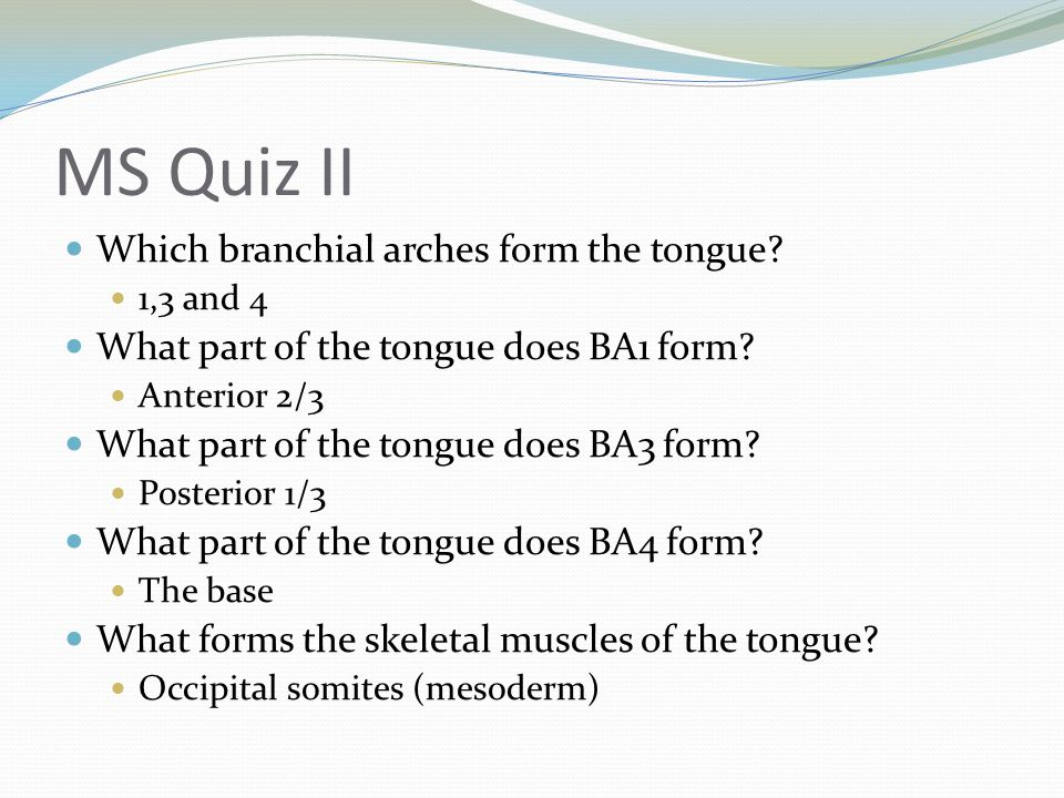 MS Quiz II Which branchial arches form the tongue