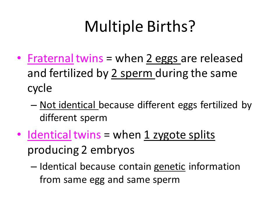 Multiple Births Fraternal twins = when 2 eggs are released and fertilized by 2 sperm during the same cycle.