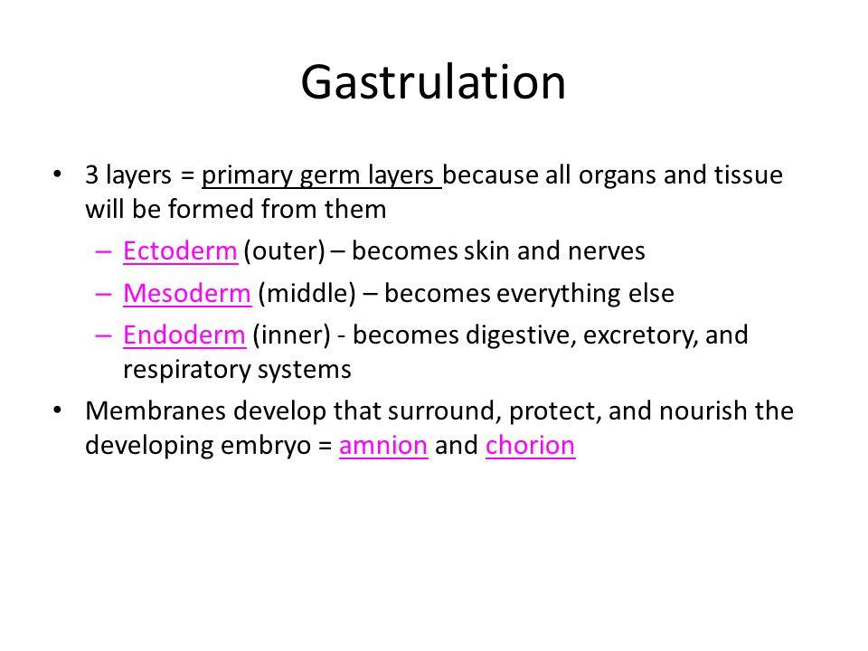 Gastrulation 3 layers = primary germ layers because all organs and tissue will be formed from them.