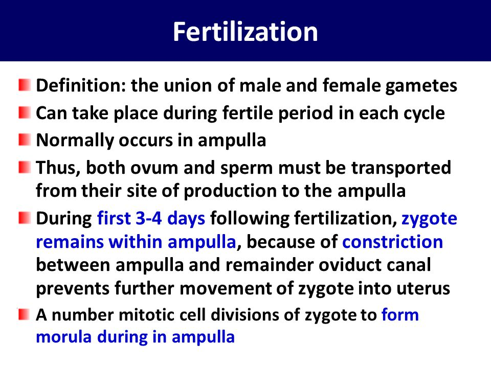Fertilization Definition: the union of male and female gametes