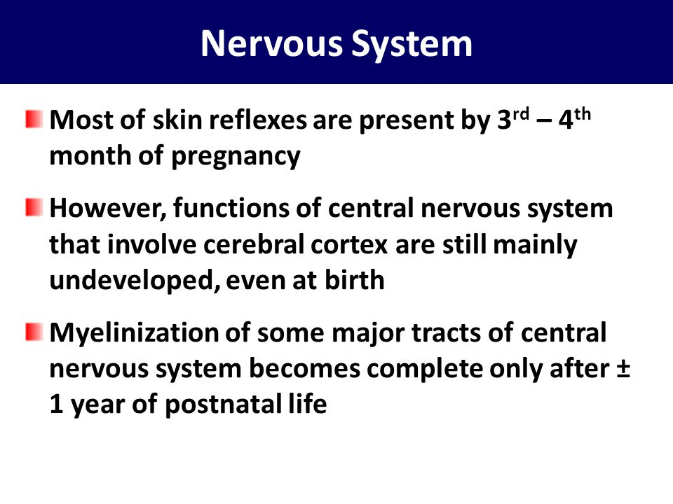 Nervous System Most of skin reflexes are present by 3rd – 4th month of pregnancy.
