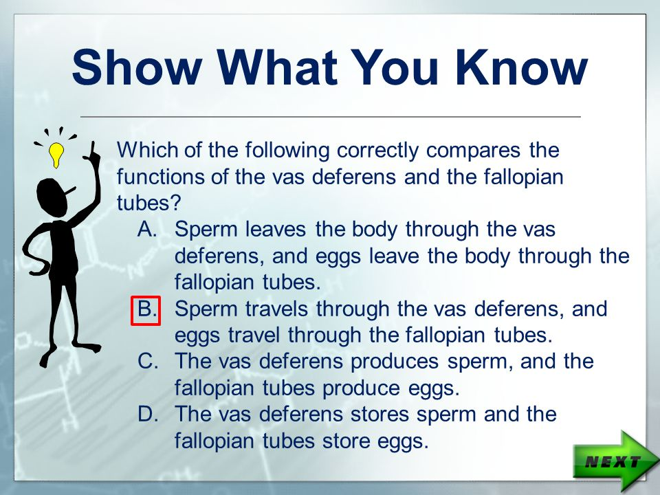 Show What You Know Which of the following correctly compares the functions of the vas deferens and the fallopian tubes