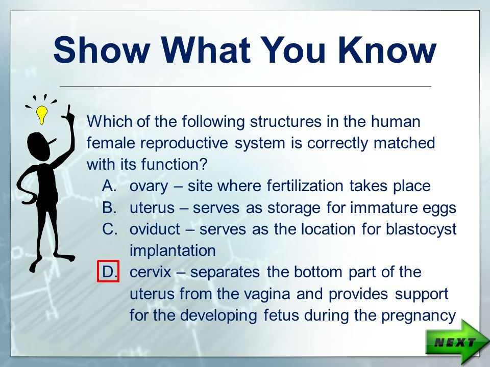 Show What You Know Which of the following structures in the human female reproductive system is correctly matched with its function