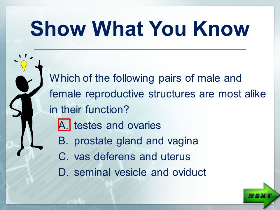 Show What You Know Which of the following pairs of male and female reproductive structures are most alike in their function